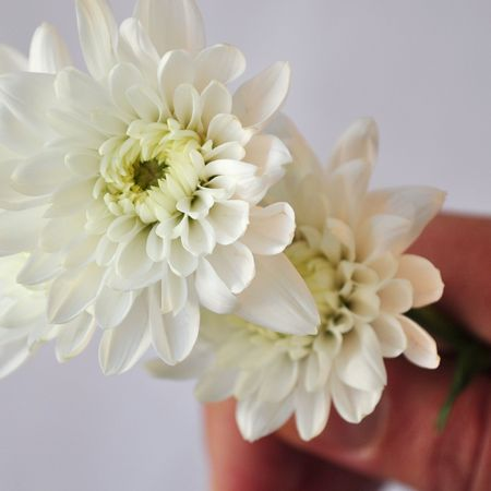 floreal: White flower symbolising peace held in hand