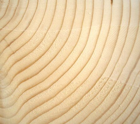 Wood cross section with annual growth rings Stock Photo - 6845485