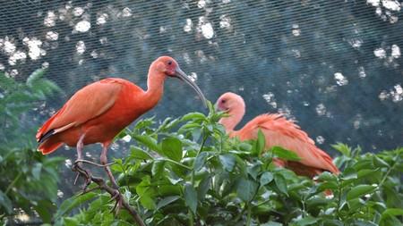 pelikan: A Pelican of the bird family Pelecanidae Stock Photo