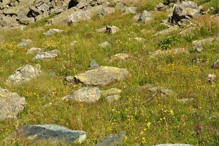 Green grass meadow lawn in mountain with rocks Stock Photo - 7575913