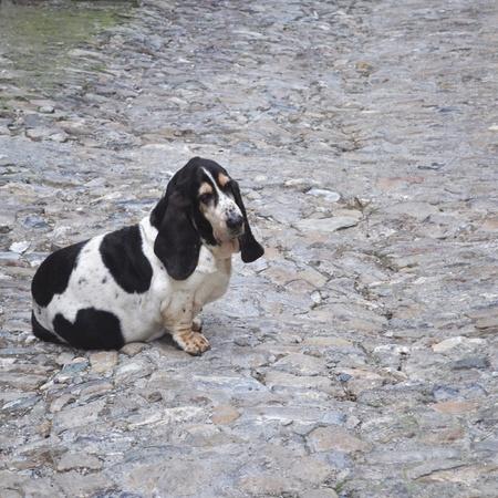 chordata: Dog scientific name Animalia Chordata Mammalia Carnivora Canidae Canis lupus familiaris