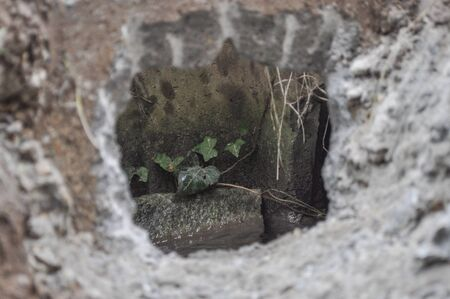 beton: Green ivy in a hole in concrete