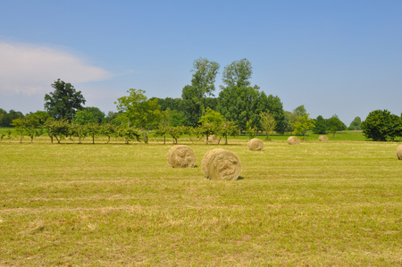 hay bales: Round hay bales in a field