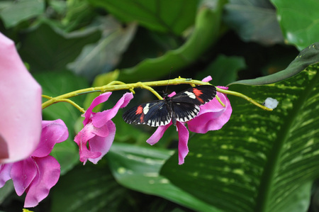 lepidoptera: Butterfly in the order of Lepidoptera insect animal on a flower