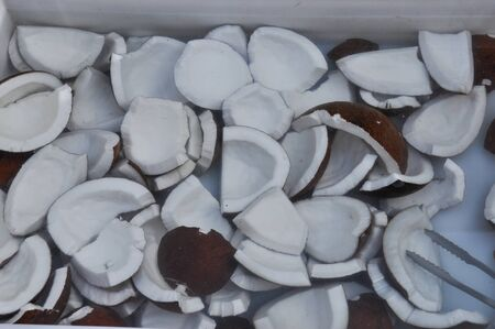 cocos nucifera: Coconut slices from the coconut palm tree (Cocos nucifera)