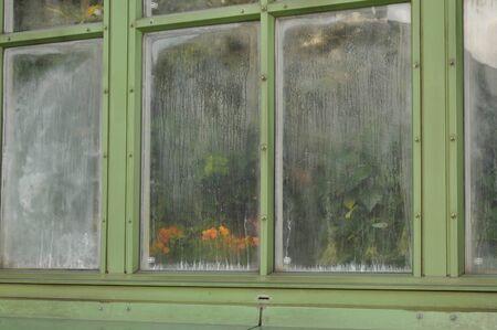 condensacion: Una ventana con flores y la condensación de agua