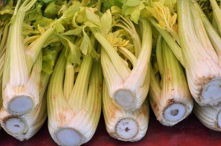 apium graveolens: Green Celery (Apium graveolens) vegetables vegetarian food