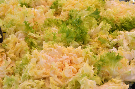 endive: Endive (Cichorium endivia) salad vegetables vegetarian food