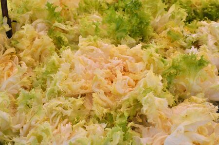 escarola: Endibia (Cichorium endivia) ensalada de alimentos vegetales vegetariana