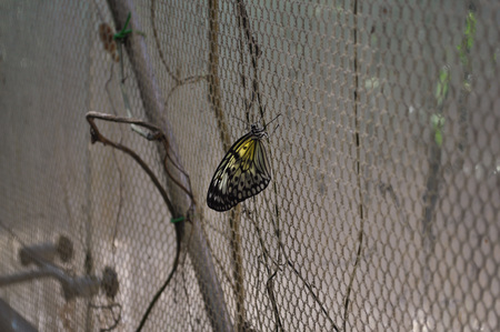 insecta: Butterfly in the order of Lepidoptera insect animal Stock Photo