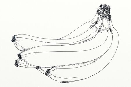 strain of a banana group Reklamní fotografie