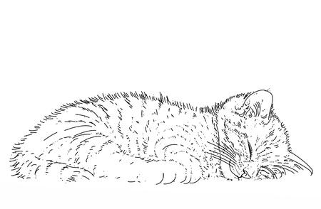 a little sleeping kitten