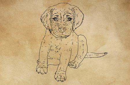 a small dog 版權商用圖片