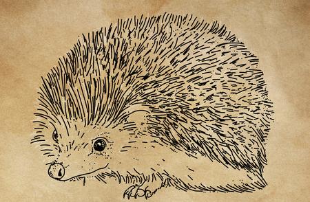 a small porcupine 版權商用圖片