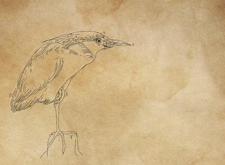 a bird 版權商用圖片