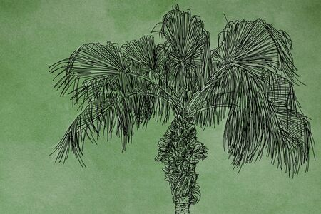 An illustration of palm