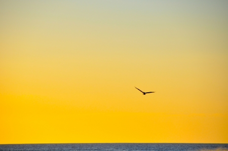 YELLOW SUNSET, WITH A BIRD FLYING, GUANACASTE, COSTA RICA photo
