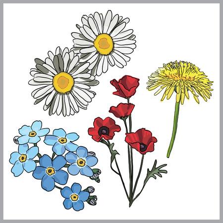 florescence: meadow flowers Illustration