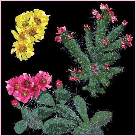cactus cartoon: cactus flower set vector illustration isolated on black background Illustration
