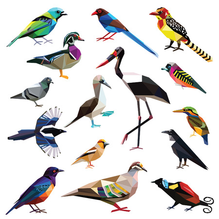 bird of paradise: Aves-set pájaros de colores diseño de bajo poli aislada en el fondo blanco.
