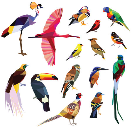 bird of paradise: Birds-set colorful birds low poly design isolated on white background. Illustration