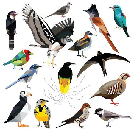 paloma: Aves-set p�jaros de colores dise�o de bajo poli aislada en el fondo blanco. Cerrojillo, Swift, Broadbill, rodillo, Harp�a, frailecillo, Barbet, perdiz, Phalarope, Paro, Dove, Swallow, Ave del para�so, Triguero, Jay