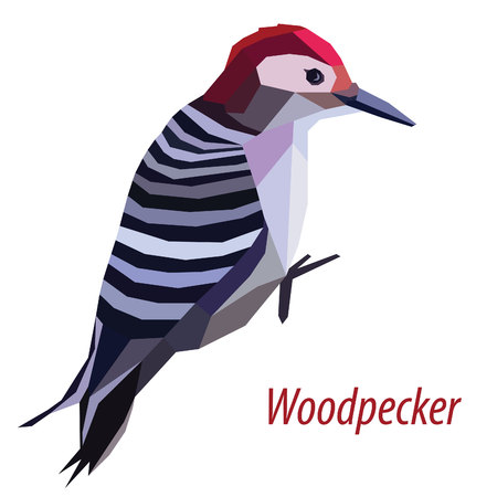 colorful woodpecker bird low poly design isolated on white background