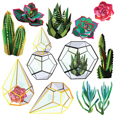 cactus succulent flower low poly set with glass terrariums vector illustration isolated on white background.
