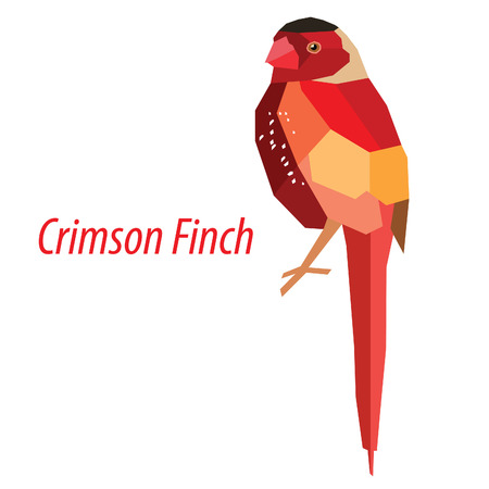 low poly: colorful Crimson Finch bird low poly design isolated on white background