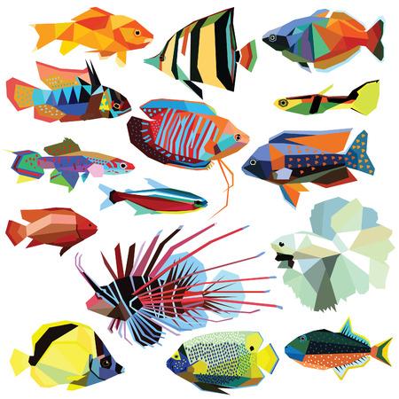 魚セット カラフルな魚の低ポリ デザインは、白で隔離。戦いの魚、Barberfish、エンゼルフィッシュ、虹魚、グッピー、ミノカサゴ、グーラミ、Ram、  イラスト・ベクター素材