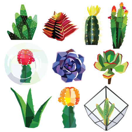 succulent cactus flower low poly colorful set with glass geometric terrariums. Vector illustration isolated on white background. Tiny cute succulents.