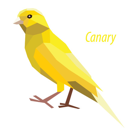 colorful Canary bird low poly design isolated on white background Illustration