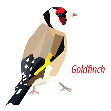 colorful Goldfinch bird low poly design isolated on white background