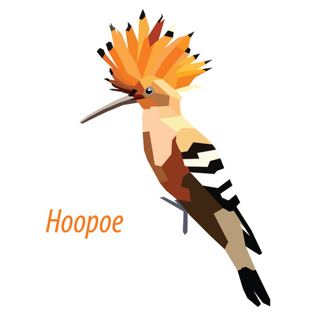 colorful Hoopoe bird low poly design isolated on white background