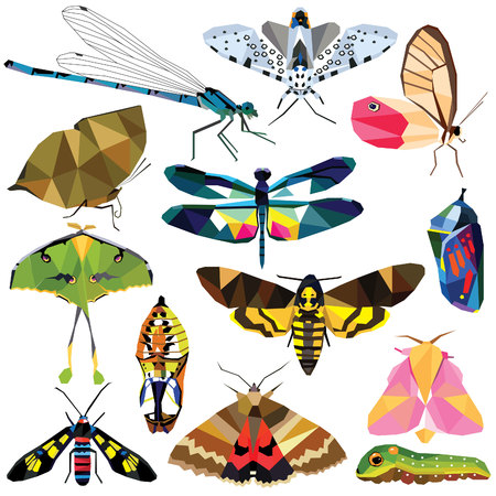 Insect set colorful low poly butterfly, moth, caterpillar, chrysalis, dragonfly designs isolated on white background. collection of animal insects in a modern style illustration.