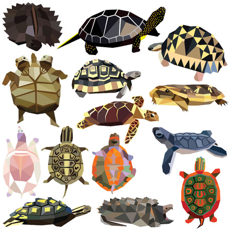 albino: Turtle Tortoise Terrapin set colorful low poly designs isolated on white background. animals illustration. Collection in a modern style.
