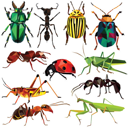 Insect set colorful low poly bug, beetle and ant designs isolated on white background. insects illustration.
