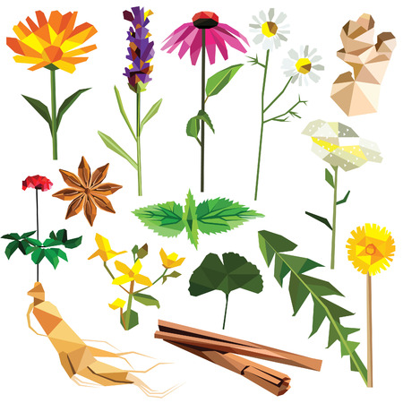 plantas medicinales: Hierbas y especias de implantación baja poli diseños botánicos de colores aislados sobre fondo blanco. ejemplo de la comida comestible. Colección de plantas medicinales en estilo moderno. flores silvestres de curación orgánica.