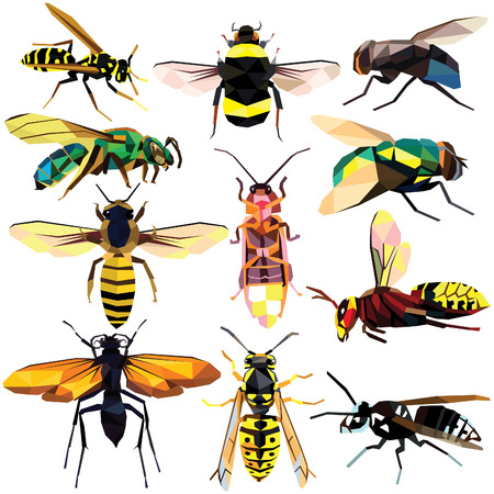 Insect set colorful low poly designs isolated on white background. illustration.