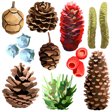 Tree cone set colorful low poly designs isolated on white background. Vector autumn botanical illustration. Collection of cones in a modern style Ilustração