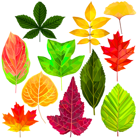 Tree fallen leaf set colorful low poly designs isolated on white background. Vector autumn botanical illustration. Collection of fall leaves in a modern style. Stock Vector - 120278834