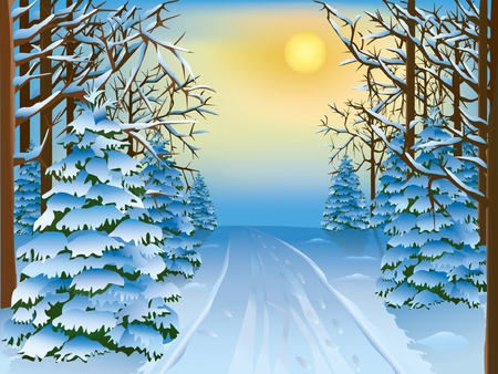 winter road: Beautiful realistic landscape - a winter forest. Vector illustration.