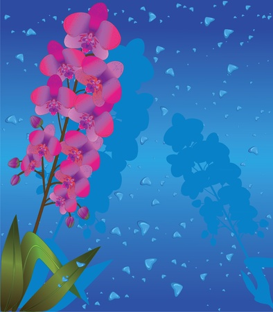 Orchid with drops in the shape of heart Vector