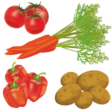 potato plant: Set  of realistic vegetables isolated on a white background. Vector illustration. Illustration