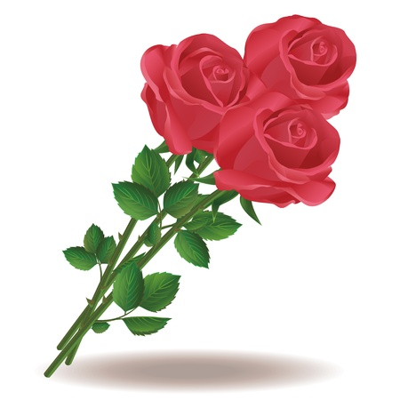 Bouquet of red roses isolated on white background Vector