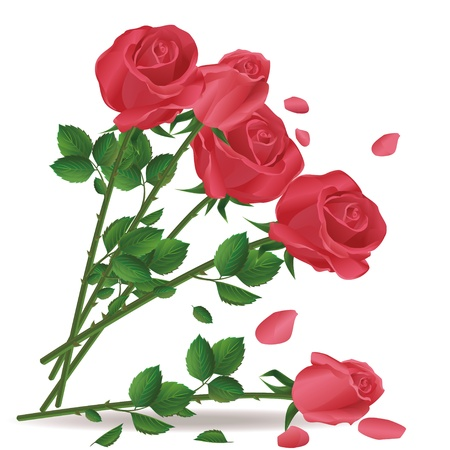 Falling bouquet of red roses isolated on white background