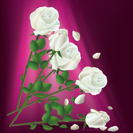 Illustration of falling white roses on maroon background Vector