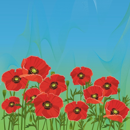 poppy flower: Floral summer background with red poppies for greeting card, banner, invitation Illustration