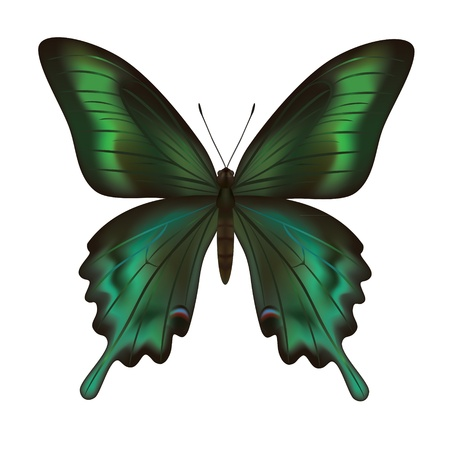 Beautiful realistic green butterfly isolated on white background Vector