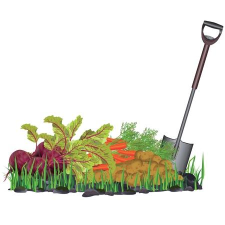 Herfst oogst groenten op het gras en schop, geïsoleerd op witte achtergrond